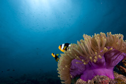 Пляж с природным рифом