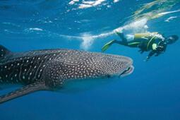 Богатый подводный мир и его обитатели