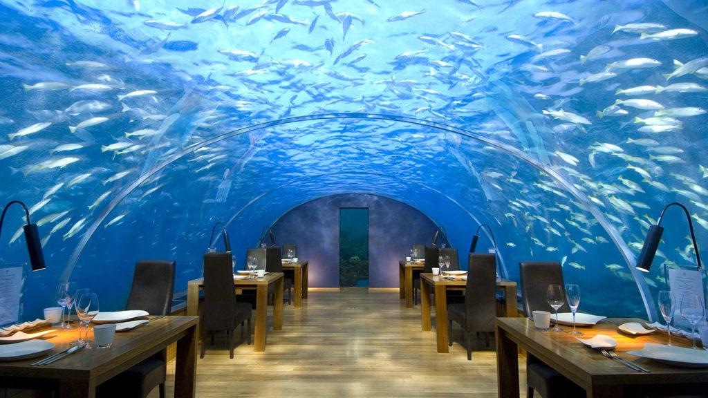Отели с лучшим домашним рифом на Мальдивах_4