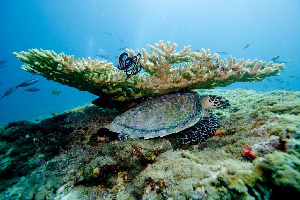Отели с лучшим домашним рифом на Мальдивах_5