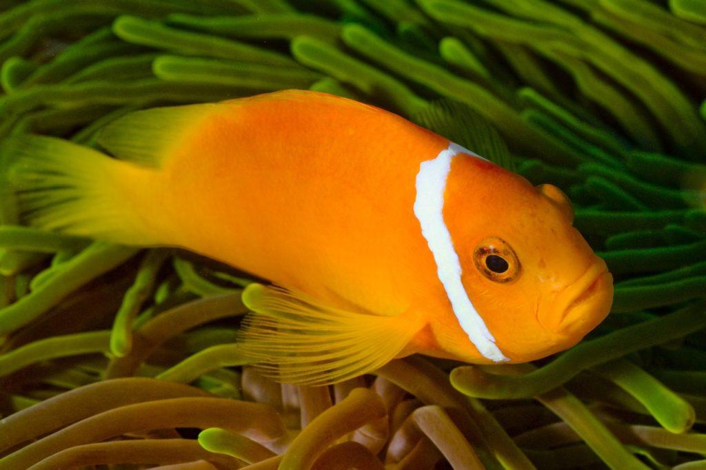 Отели с лучшим домашним рифом на Мальдивах
